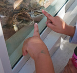 An invasive Burmese Python has the attention of this young zoo visitor
